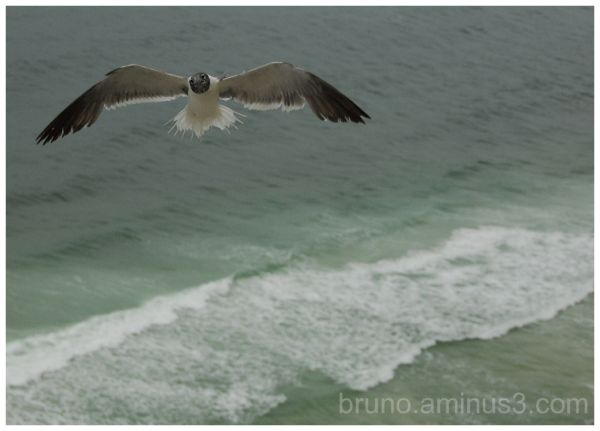 Bird, Cloudy, Flying, Animals, Beach, Ocean