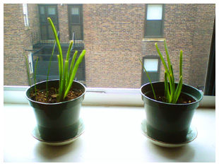 two small plants