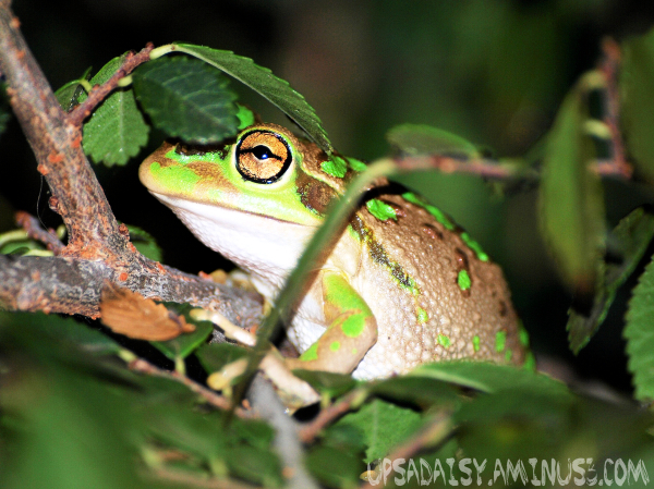 """Motorbike Frog"""
