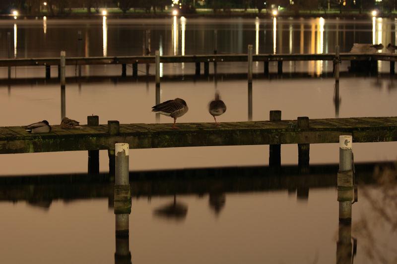 Goose Jetty :-)