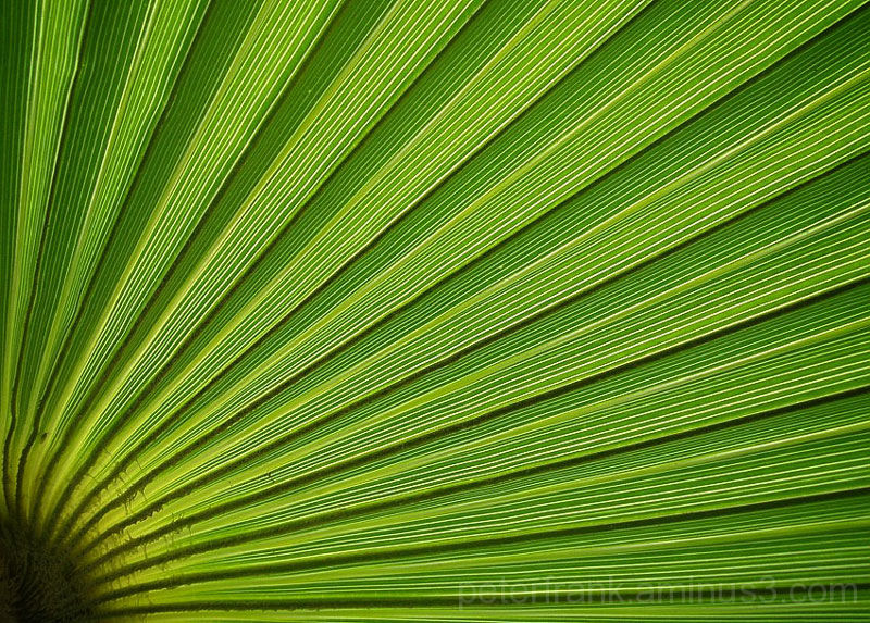 plant nature abstract green leaf palm