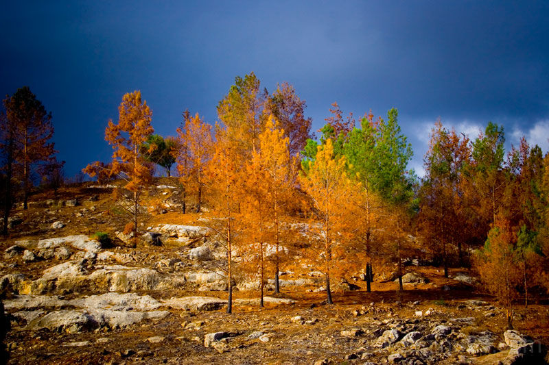 landscape tree colour nature
