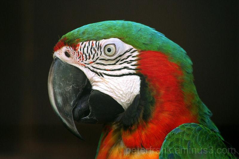 animal parrot bird nature colour