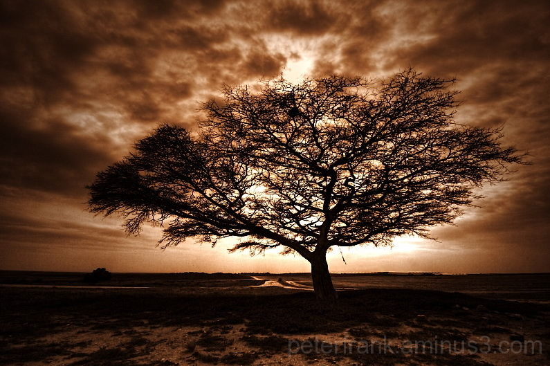 landscape nature desert tree