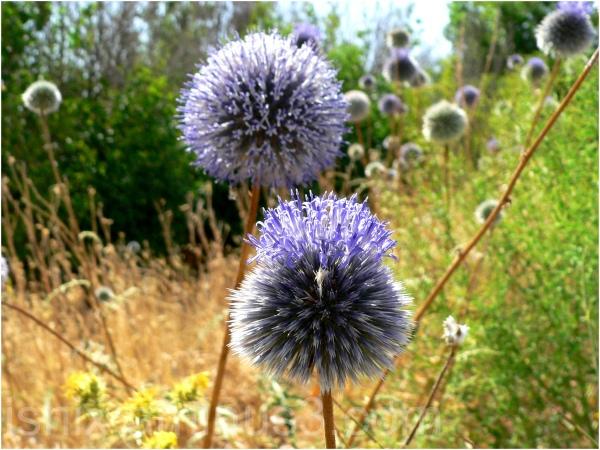 Thorny flower.