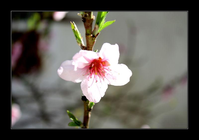 Ja és Primavera II