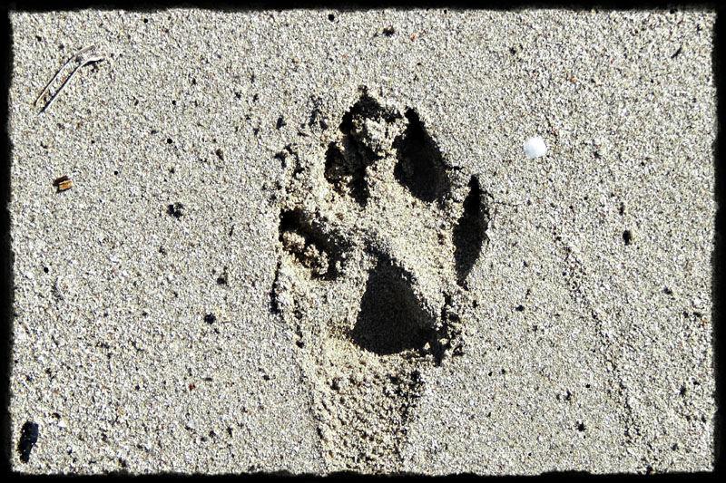 Deixa emprenta / Leaves footprint
