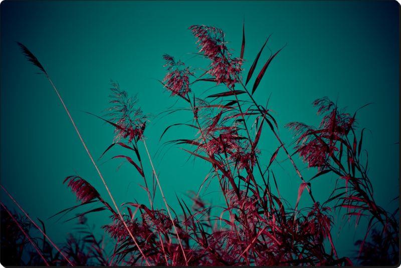 Al vent / Wind