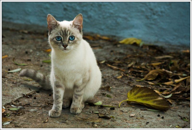 Moixet / Kitten