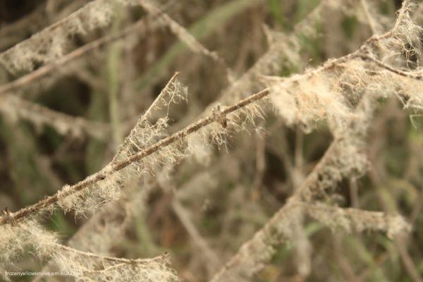 branches Mysore sun light fur dust