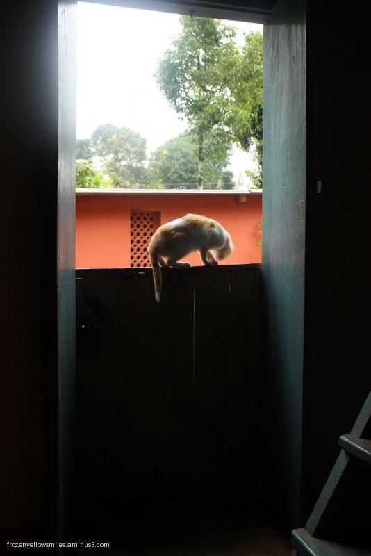 cat animal white attic red door doorway