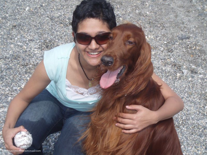 animal red dog irish setter hugger ball beach