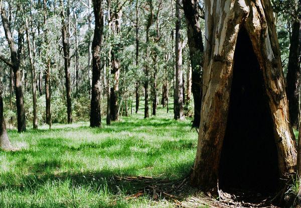 the empty tree