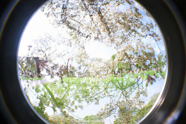 fisheye, freiburg, summer