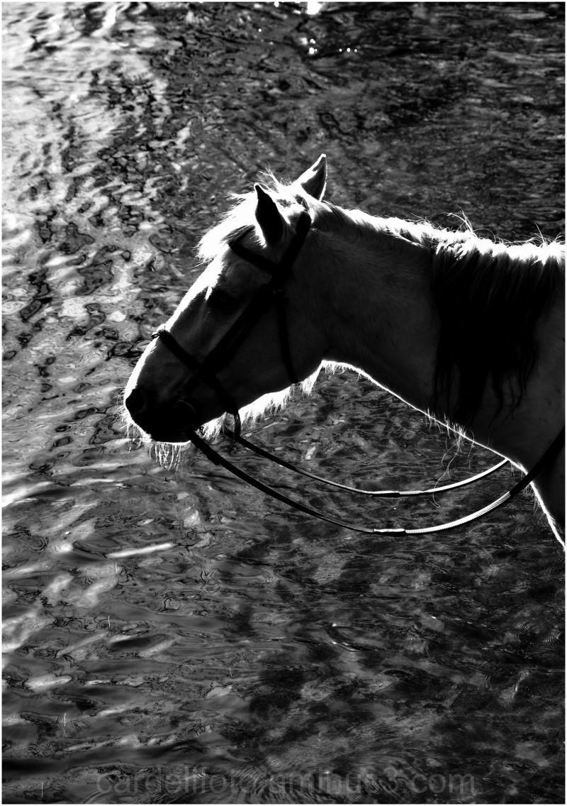 backlighted horse (I/II)