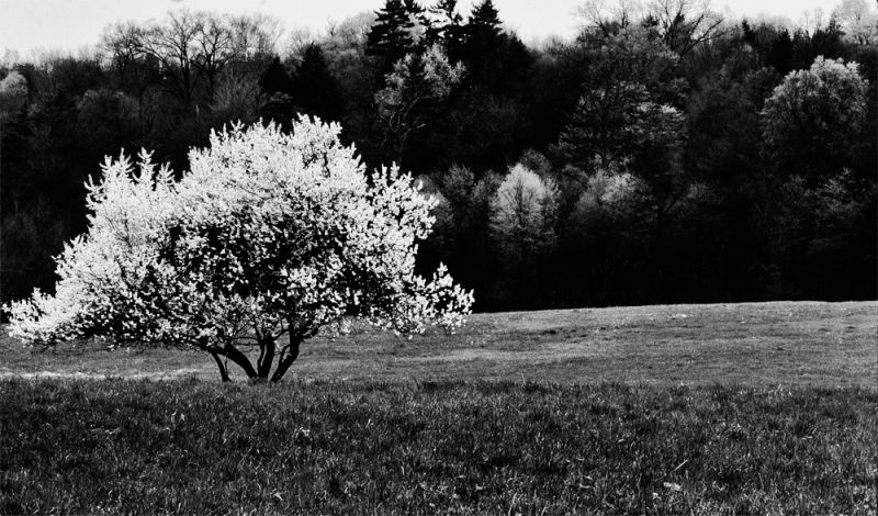 Spring is coming soon