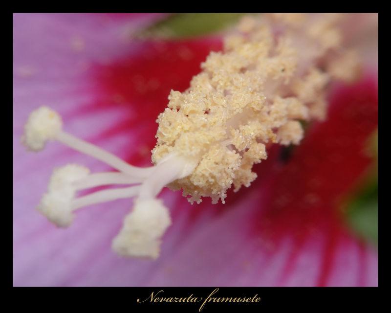 Viewless Beauty 2