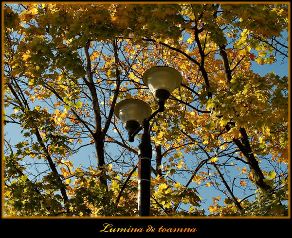 Lights of fall