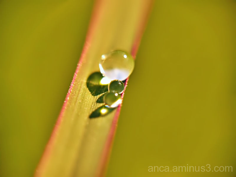 The water drop 3/3