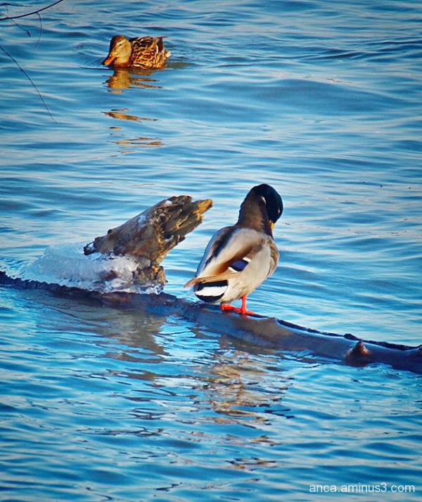Ducky 2