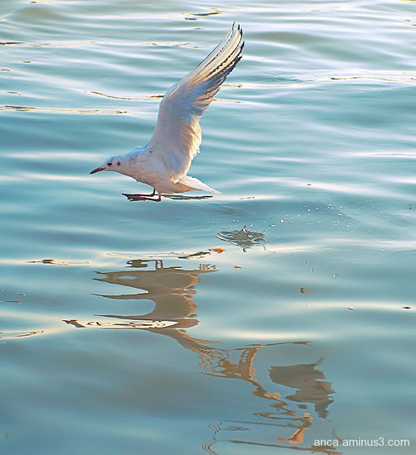 Seagull 1/5