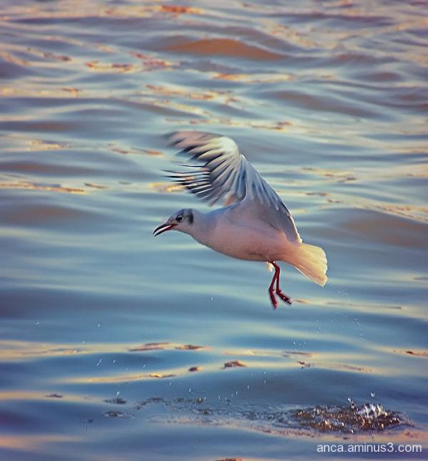 Seagull 4/5