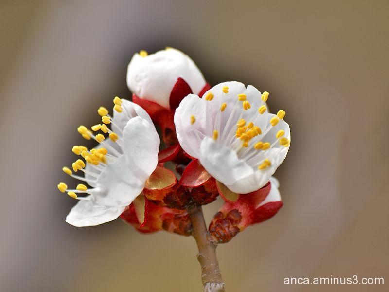 Spring 1/3