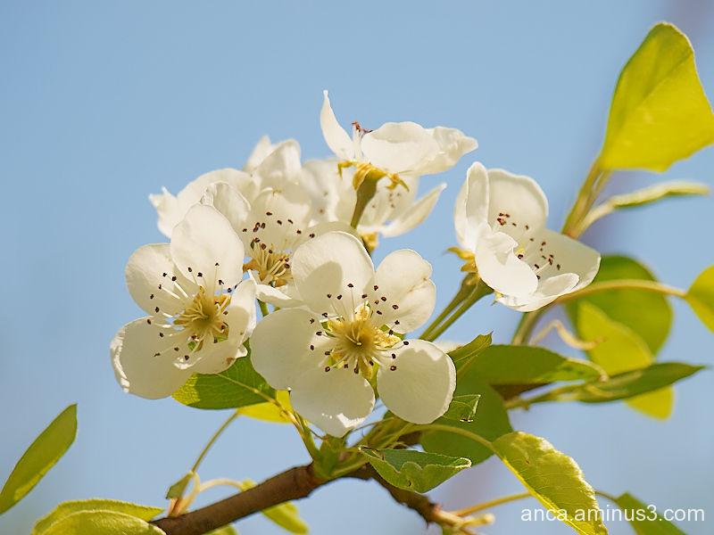 Spring 2/3