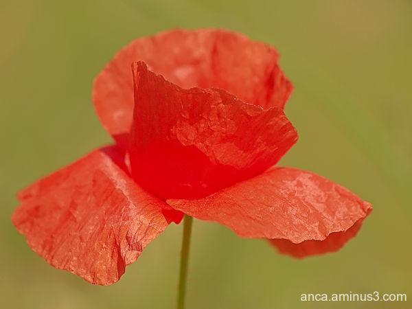 Profil de floare