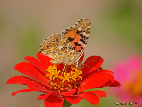 Flowers and butterflies 2/4