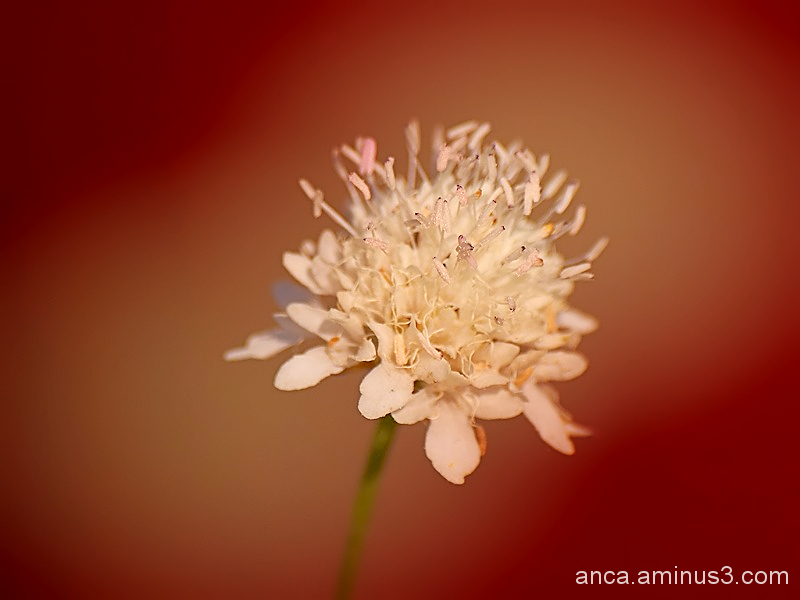 A 53-a toamna/autumn