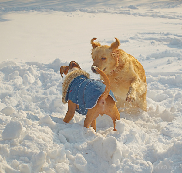 Joy of snow