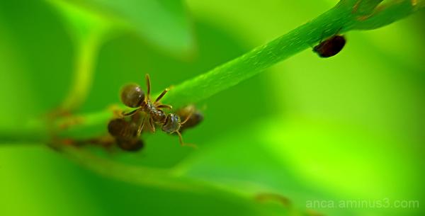 On a leaf...