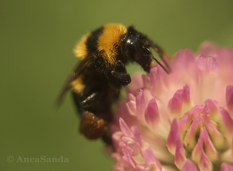 The diligent bee