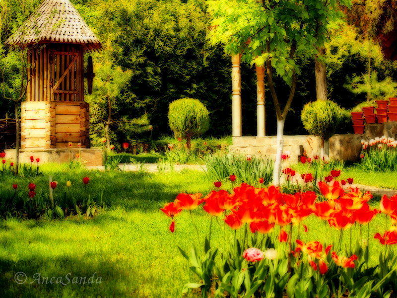 The garden with tulips