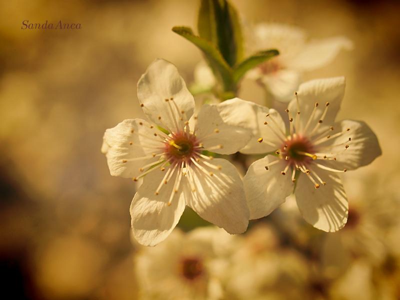 A springtime...