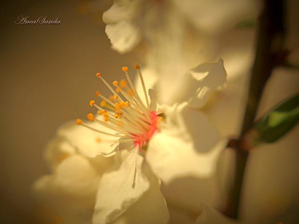 Springtime 2