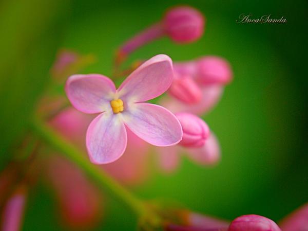 Springtime 5