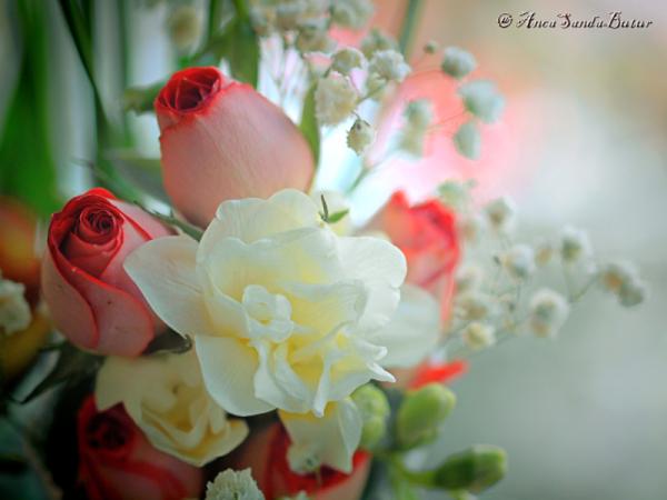 Flori pentru tine femeie si mama!