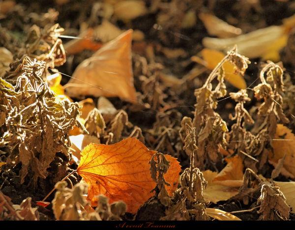Voila l'automne!