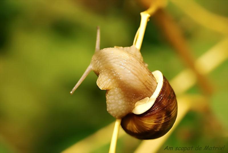 """Snails Saga (one of many)-""""Bye-Bye, Matrix!"""""""