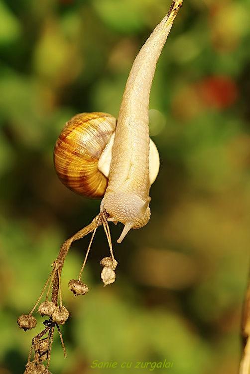 """Snails Saga (one of many)- """"I'm a Ninja!"""""""