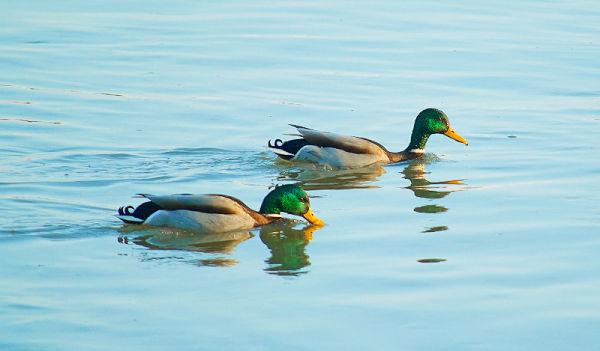 Floating friends 1