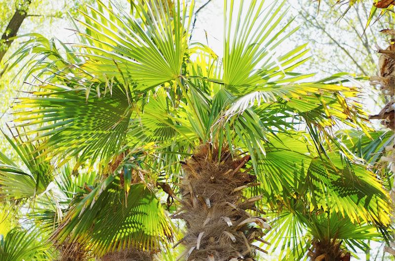 Copacii Vietii