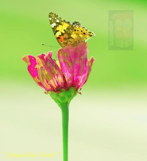 Flower reflex (one of many)