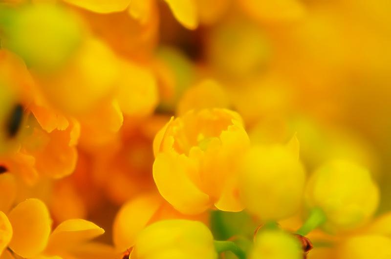 Light & color 3