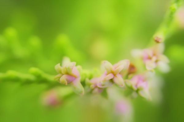 Light in Spring