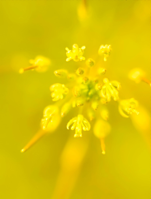 Light in Spring-one of  many