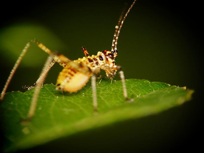 Bai, insecto !