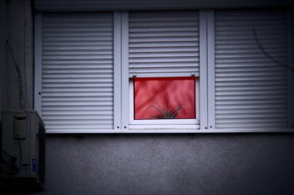 Windows ŢP